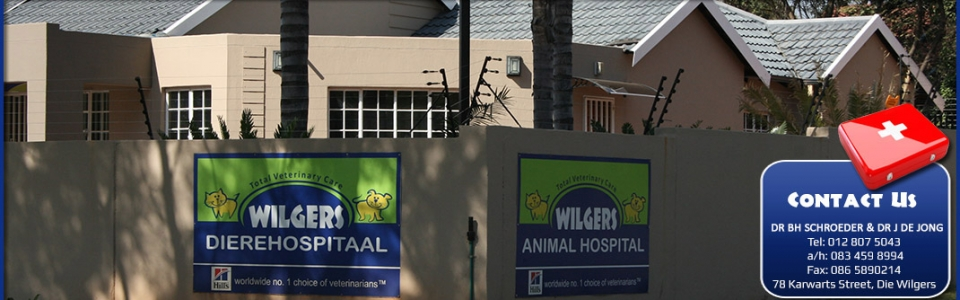 Wilgers Animal Hospital – front wall